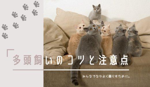 猫の多頭飼い失敗しないコツ|性別や相性の注意点と準備しておくこと
