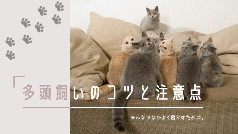 猫の多頭飼いのコツと注意点