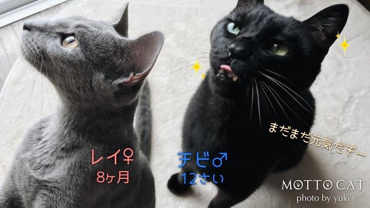 黒猫とロシアンブルー