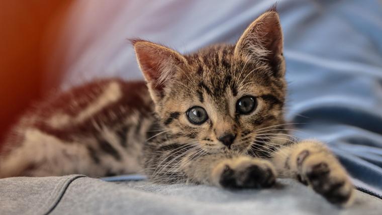 子猫 3ヶ月