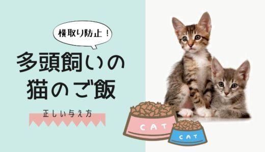 多頭飼いの猫の正しい餌のやり方|ご飯の横取り防止や分け方を徹底解説