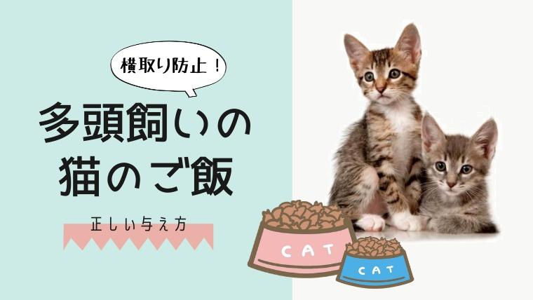 多頭飼いの猫の餌