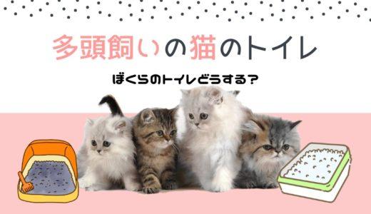 猫の多頭飼いのトイレは共用できる?おすすめトイレや設置場所の注意点も紹介