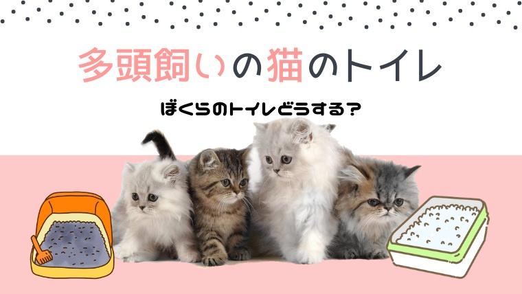 多頭飼いの猫のトイレ