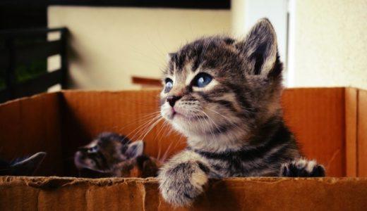 生後2ヶ月の子猫の育て方|適切な餌の量や体重は?留守番はできる?