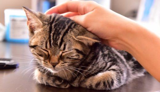 猫に構いすぎるとストレスで嫌われる?構う頻度と正しい構い方を解説!