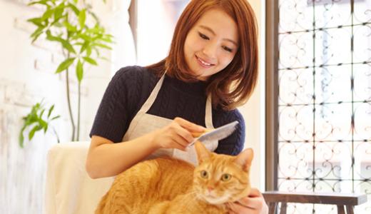 猫に関する資格・検定一覧|仕事や介護にも活かせるおすすめ資格9つ