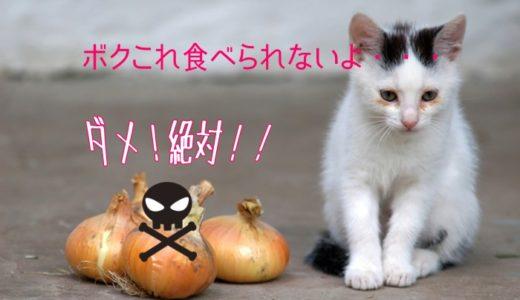 絶対ダメ!猫が食べてはいけない危険なNG食べ物一覧