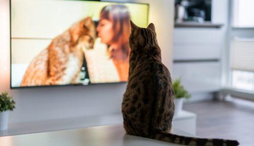 猫映画おすすめ20選!猫が出てくる感動の名作を邦画・洋画・アニメ別に紹介!