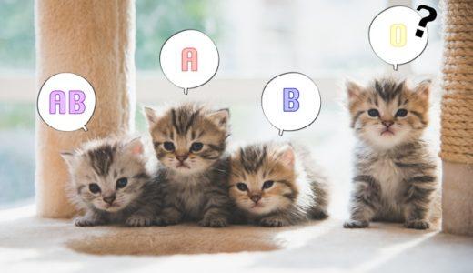 猫は血液型で性格は違う?種類の割合や検査料金、調べ方について