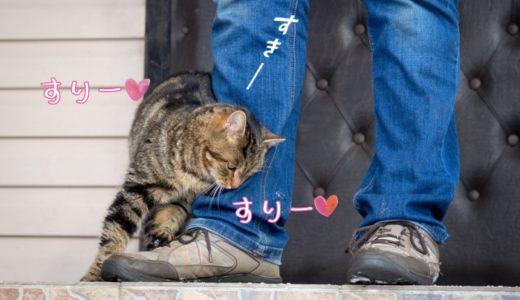 猫がすりすりしてくる意味や理由は?途中で急に噛むのはなぜ?