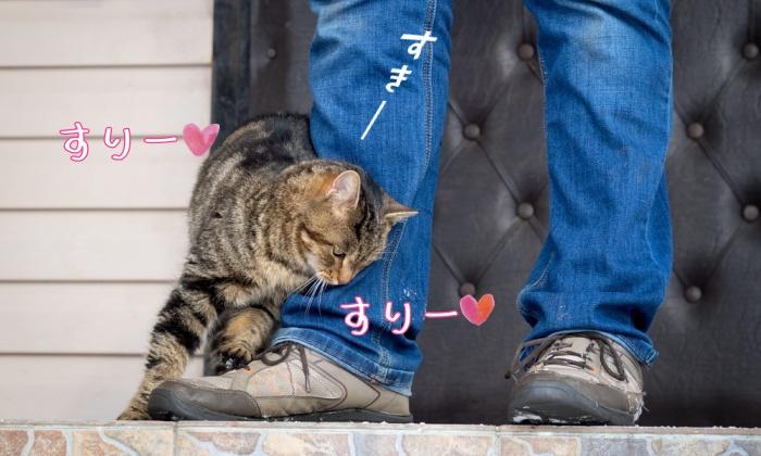 猫,すりすり