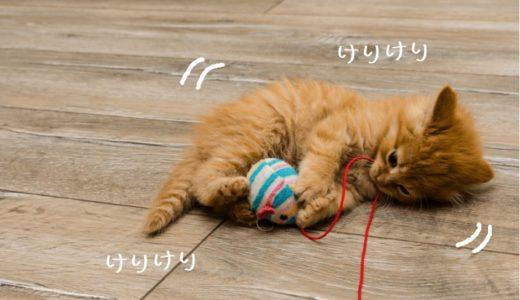 猫キックがかわいいけど痛い!けりけりの意味や噛む理由はなぜ?