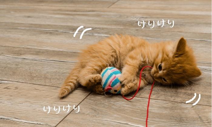 猫,けりけり