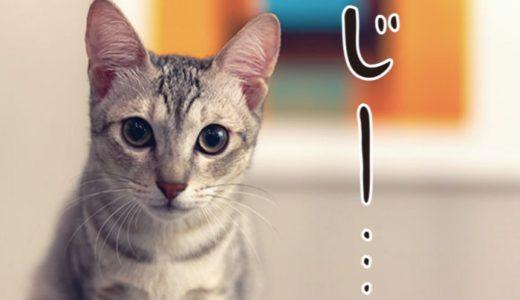 猫が飼い主を見つめる意味は?じっと見る時の気持ちや理由を解説!