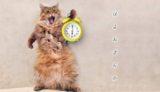 猫が起こす理由と対策