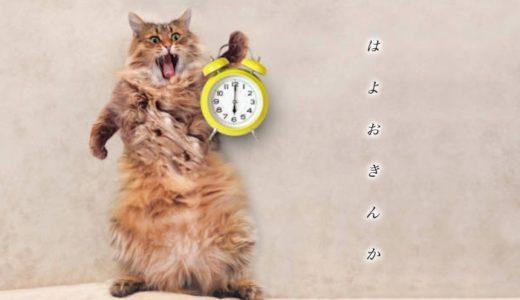 猫が早朝や夜中に飼い主を起こす理由と対策!起こされる寝不足の解消方法6つ