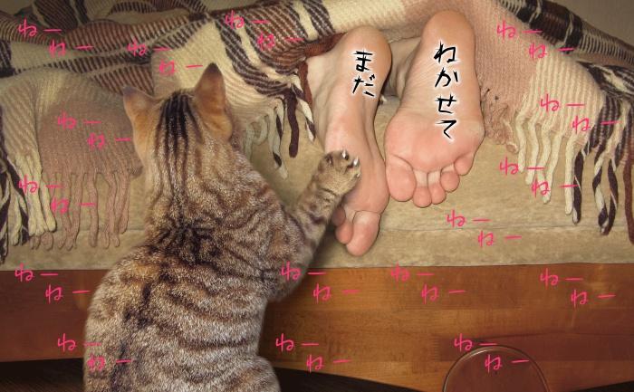 猫,起こされる