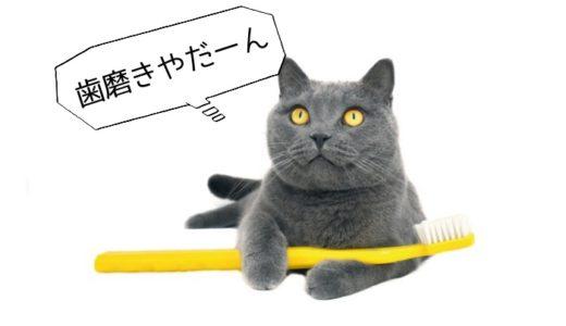 猫が歯磨きを嫌がるけど本当に必要?頻度ややり方、おすすめグッズも紹介!