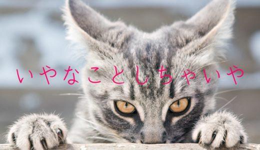 猫に嫌われる人の特徴や飼い主の嫌われる行動や理由とは?仲直りする5つの方法