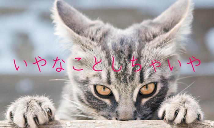 猫,嫌われる