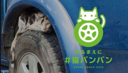 猫バンバンとは?猫の命を守る効果は?やり方とステッカーの作り方も紹介!