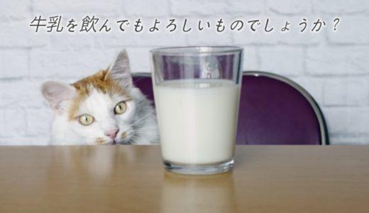 猫に牛乳を与えるのはダメなのか?下痢にならない正しいミルクの飲ませ方