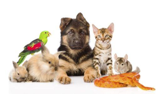 信頼できる猫のペットショップの選び方|良い店・悪い店の見分け方や注意点