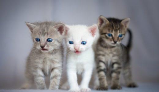 猫白血病はうつる?多頭飼いの可否、同居猫への感染力や感染経路について