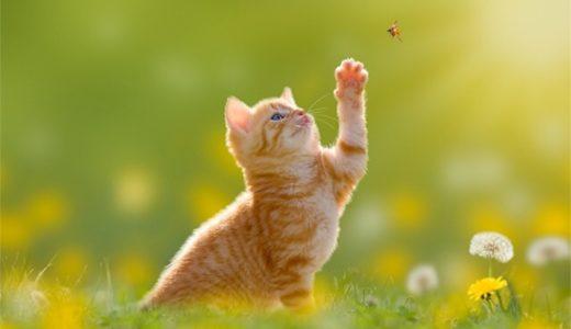 2020年猫カレンダーまとめ!人気の岩合光昭&卓上や壁掛け・無料壁紙も紹介