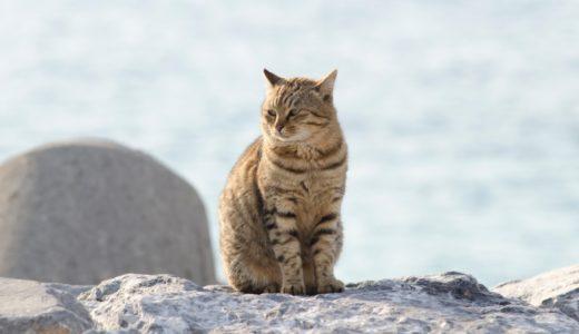 ねことじいちゃんのあらすじや猫キャスト!ロケ地(撮影場所)の島についても