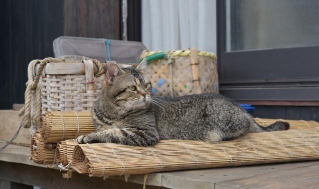 ねことじいちゃん,猫,ベーコン