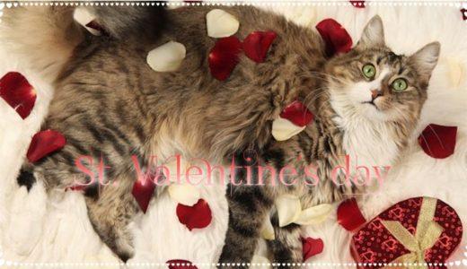 バレンタイン2020|猫のチョコレートブランドまとめ!パッケージもかわいい❤