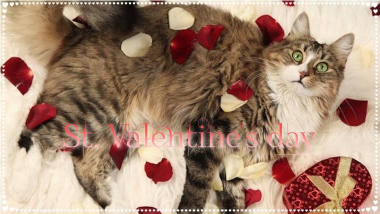 猫,バレンタイン,チョコレート