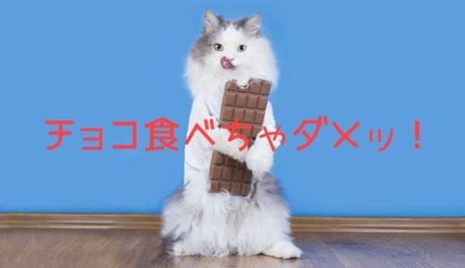 猫がチョコレートを食べたらどうなる?症状や致死量は?食べた時の対処法