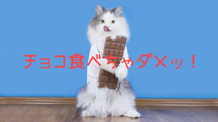 猫,チョコレート