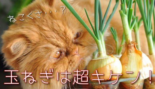 猫が玉ねぎやネギを食べた時の中毒症状や致死量は?少量や舐めた時の対処法も
