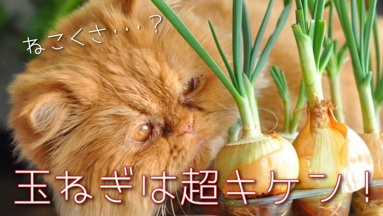 猫,玉ねぎ