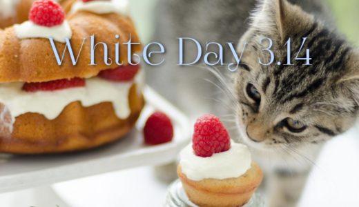ホワイトデー2019|猫好きへのお返しまとめ!猫グッズや人気のスイーツも紹介