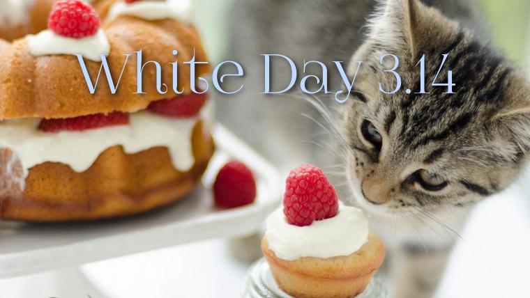 ホワイトデー,猫