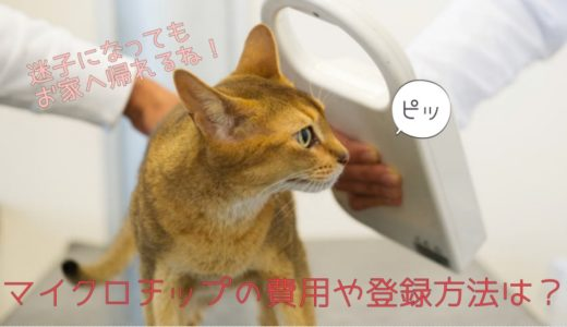 猫のマイクロチップの装着費用や登録方法|埋め込み場所は体のどこに?