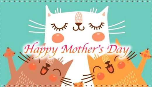 母の日プレゼント☆猫好きの母が喜ぶ猫グッズ・カーネーション・スイーツは?2019年版