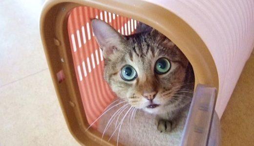 猫のための災害対策|地震や台風に備える避難グッズや準備品は?