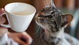 東京都内の保護猫カフェ2019