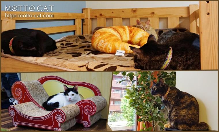 保護猫カフェ,東京,ミャゴラーレ