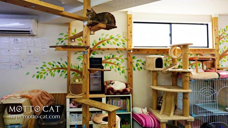 保護猫カフェ,東京,里親カフェ