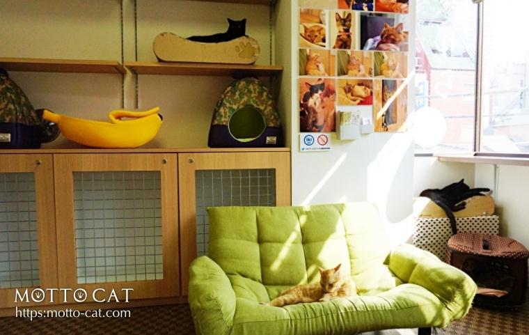 保護猫カフェ,東京,たまゆら
