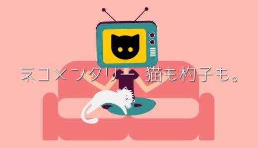 ネコメンタリーの2019放送予定や再放送は?見逃し動画はある?