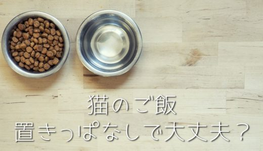 猫のドライフードの置き餌をやめる方法|膀胱炎や太るデメリットもあり?