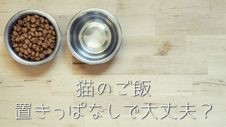 猫の置き餌